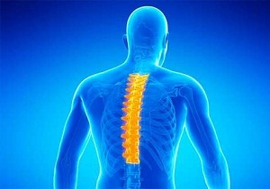 Нервы позвоночника анатомия