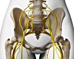 Пояснично-крестцовое сплетение: анатомия, патологии и их симптомы