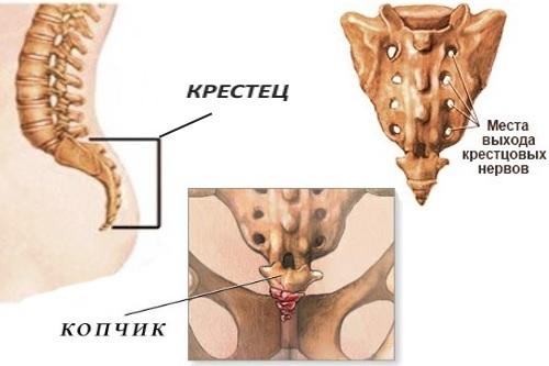 Боль в копчике: причины у мужчин, почему болит, симптомы болезней