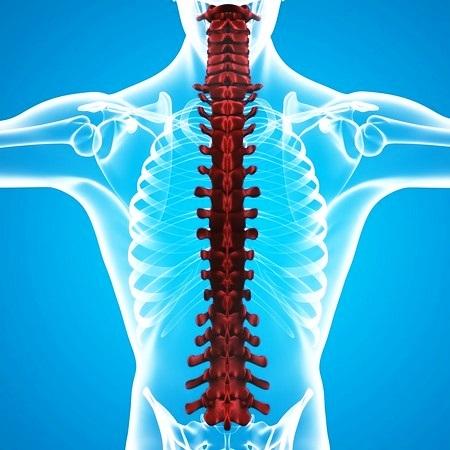 Оболочки спинного и головного мозга у человека: строение, особенности, функции
