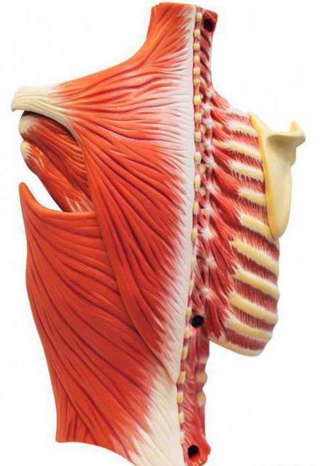 Невралгия грудного отдела: симптомы, как и чем лечить у женщин, мужчин