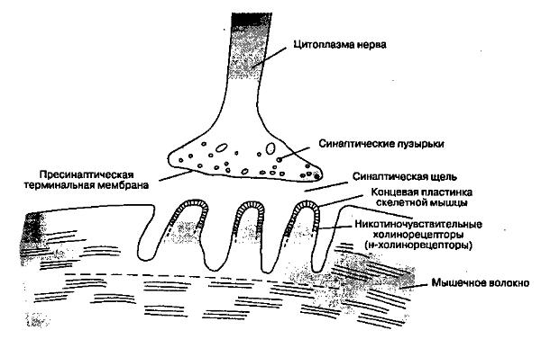 Препараты миорелаксанты при остеохондрозе: симптомы препаратов, названия таблеток, расслабляющих мышцы