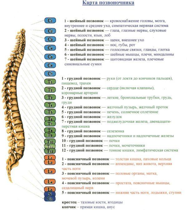 Пояснично-крестцовый корсет (жесткий, полужесткий): особенности корректоров для осанки, виды
