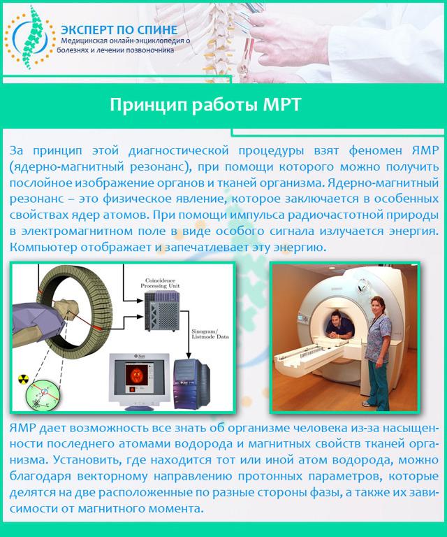 МРТ пояснично-крестцового отдела позвоночника: что показывает, подготовка, как делают, расшифровка