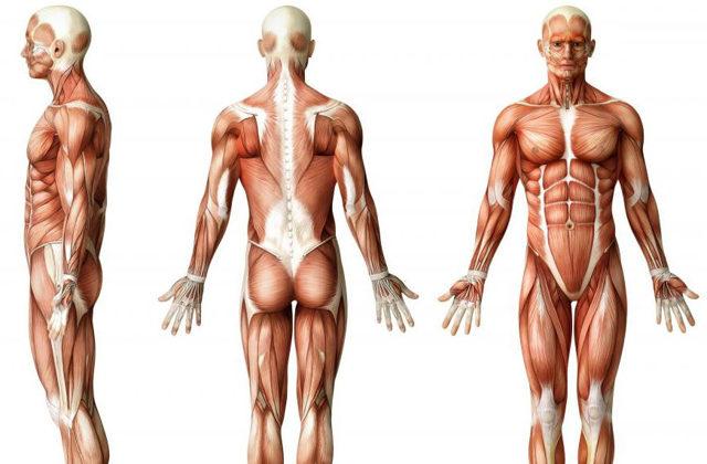 Грыжа копчика: симптомы, причины, лечение и диагностика, профилактика