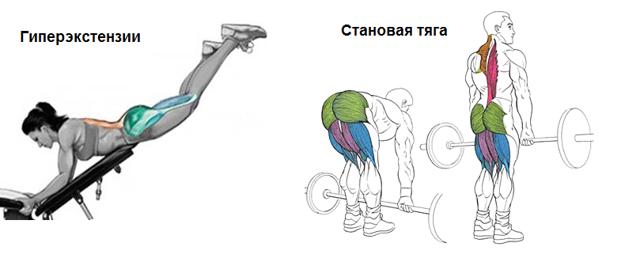 Мышцы спины: анатомия, функции в позвоночнике (трапециевидные, глубокие, выпрямляющие)