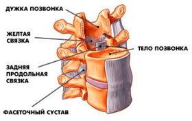 Отделы позвоночника у человека: таблица, особенности строения позвоночного столба