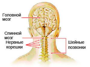 Миелопатия шейного и грудного отдела: симптомы, лечение, виды (цервикальная, спинальная, сосудистая)