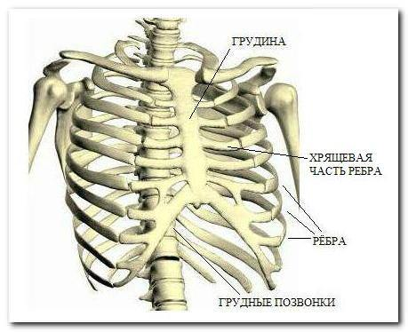 Боль в грудине при остеохондрозе, может ли болеть грудная клетка