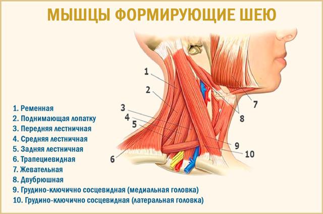 Болит шея после сна: что делать, почему возникает боль по утрам