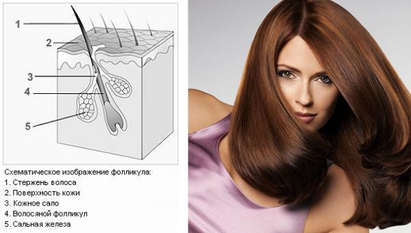 Витамины Алерана (alerana) для роста волос: состав, цена, инструкция по применению, отзывы