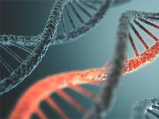 Ген облысения: как передается, существует ли риск наследственной алопеции и какое у нее лечение