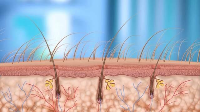 Шампунь дюкрей от выпадения волос (ducray): отзывы, цена, состав, инструкция по применению, плюсы и минусы