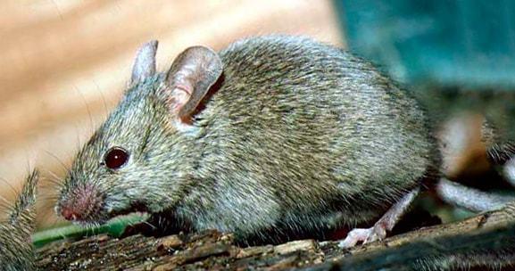 Неприятный запах от кожи головы и волос: причины и способы избавиться от него для женщин и мужчин, лечение «мышиного» шлейфа, чем перебить аромат лука, керосина, дегтярного мыла, сигарет костра