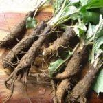 Травы от выпадения волос у женщин и мужчин: отзывы, эффективные рецепты от облысения (с корнем лопуха, крапивой и другие)