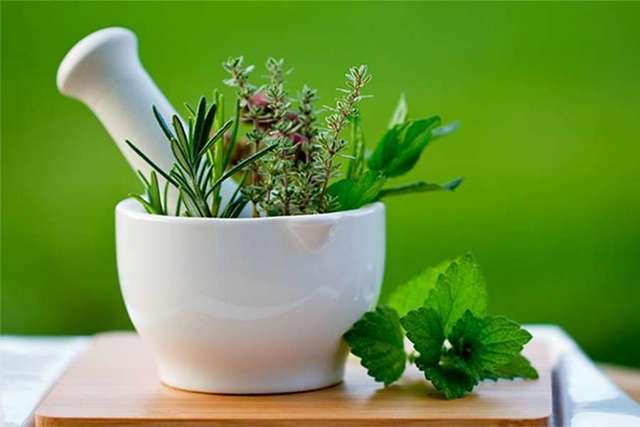 Травы от псориаза, которые можно принимать внутренно, какие лучше всего помогают, чистотел и другие растения от болезни на голове, отзывы, инструкция по применению